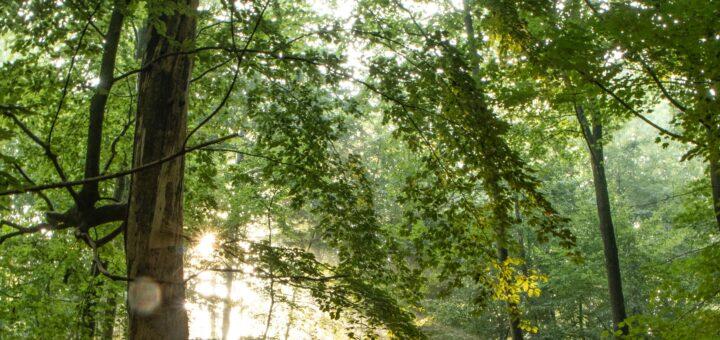 Laubwald mit Sonnenstrahlen