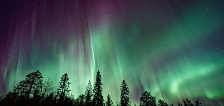Grüne Polarlichter mit Baum Silhouetten im Vordergrund
