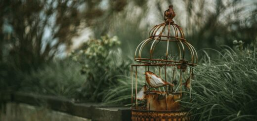 Alter Vogelkäfig mit offener Tür
